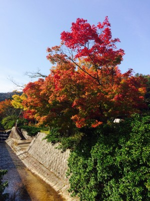 滝上公園紅葉1
